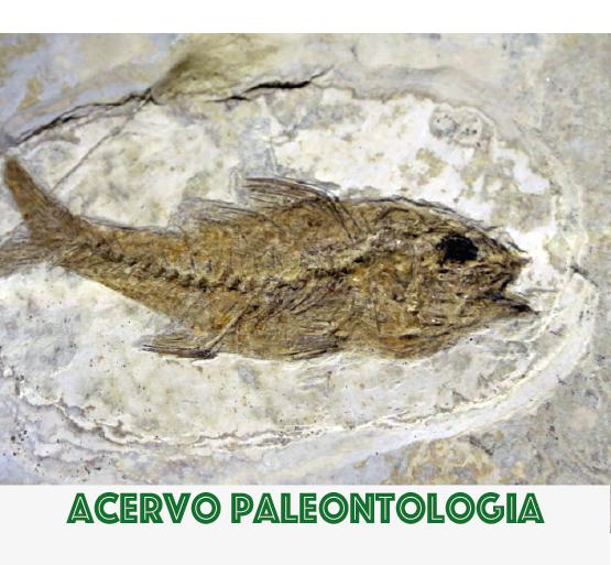 Acervo Paleontologia