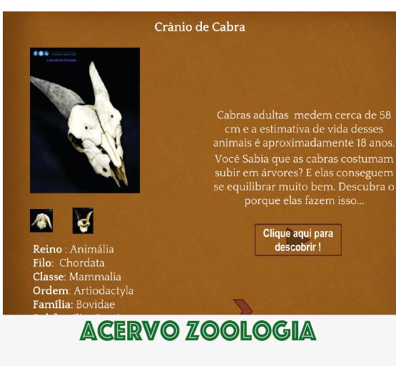 Acervo Zoologia